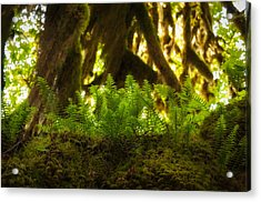 Licorice Fern Acrylic Print by Rich Leighton