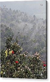 Acrylic Print featuring the photograph Life After Death by Gina Savage