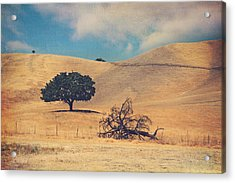 Life And Death Acrylic Print by Laurie Search
