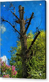 Life And Death Acrylic Print by Mariola Bitner