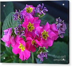 Life And Death Of Flowers Acrylic Print by Kenny Bosak