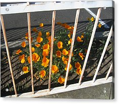 Acrylic Print featuring the photograph Life Behind Bars by Marie Neder