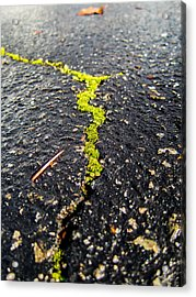 Acrylic Print featuring the photograph Life Between The Cracks by Mike Lee