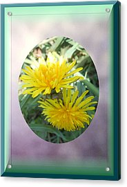Life Is Made Up Of Dandelions Acrylic Print by Patricia Keller