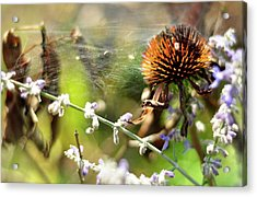 'life' Acrylic Print by Joanne Brown