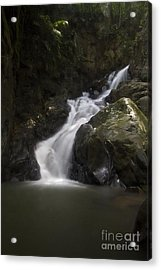 Acrylic Print featuring the photograph life of Borneo. by Gary Bridger