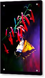 Life Of Butterfly Acrylic Print by Susanne Still