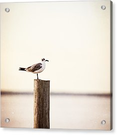 Life On The Bay Acrylic Print
