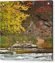 Life On The River Square Acrylic Print by Bill Wakeley