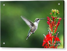 Acrylic Print featuring the photograph Lifes Little Pleasure by Judy Wolinsky