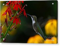 Acrylic Print featuring the photograph Lifes Little Pleasures 2 by Judy Wolinsky