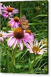 Life's Rare Jewels Acrylic Print by Ann Willmore