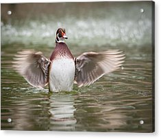 Lift Off Acrylic Print by Tyson and Kathy Smith