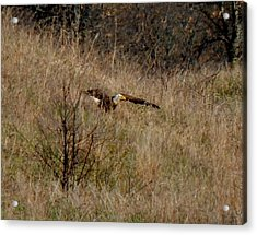Lift Off Acrylic Print by Wild Thing