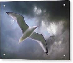 Lift - Oil Paint Effect Acrylic Print by Brian Wallace