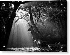 Light And Deer Acrylic Print