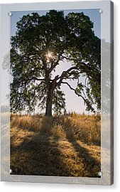 Light And Life Acrylic Print