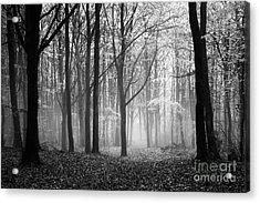 Light And Shadow Acrylic Print by Anne Gilbert