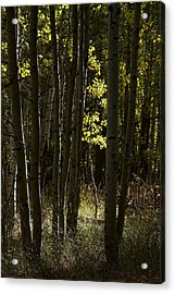 Light And  Shadows D0468 Acrylic Print by Wes and Dotty Weber