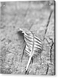 Light As A Feather Acrylic Print by Chastity Hoff
