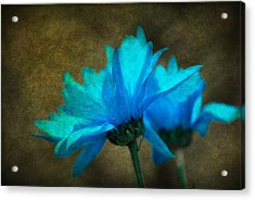 Light Blue Acrylic Print by Linda Segerson