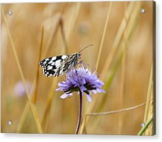Light Butterfly Acrylic Print