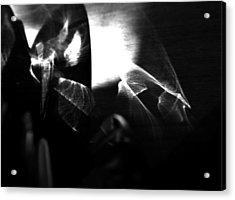 Light Filtering In Acrylic Print by Tara Miller