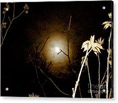 Light In The Dark Acrylic Print by Randi Shenkman