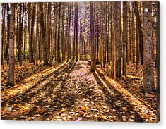 Light In The Forest Acrylic Print by Jim Sauchyn