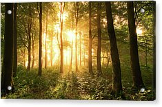 Light In The Forest. Acrylic Print