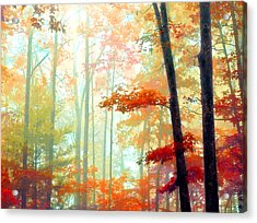Light In The Forest Acrylic Print by William Schmid
