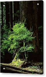 Light In Darkness Acrylic Print by Kim Lessel