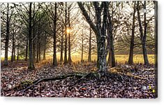 Light In The Trees Acrylic Print by Debra and Dave Vanderlaan