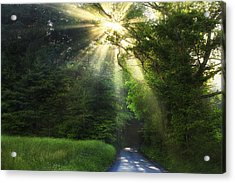 Light In The Woods Acrylic Print by Andrew Soundarajan