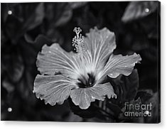 Light Magnets... Acrylic Print