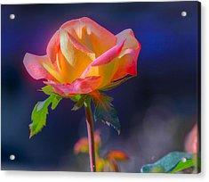 Flower 10 Acrylic Print
