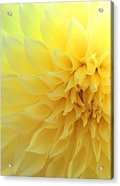 Light Of Faith Acrylic Print
