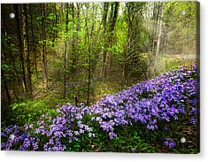 Light Of The Forest Fairies Acrylic Print by Debra and Dave Vanderlaan