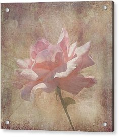 Light Pink Grunge Rose Acrylic Print