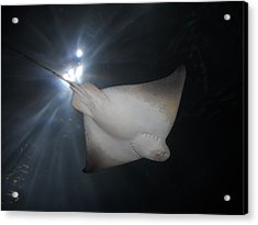 Acrylic Print featuring the photograph Light Ray by Kristen R Kennedy
