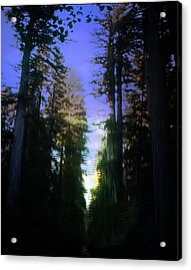 Acrylic Print featuring the digital art Light Through The Forest by Cathy Anderson
