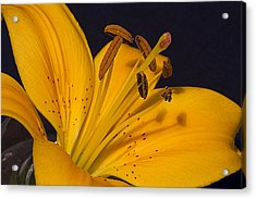 Acrylic Print featuring the photograph Light Touch L by Shirley Mitchell