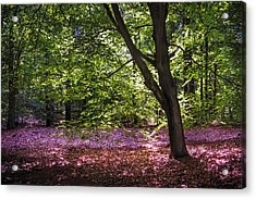 Light Tree In Hoge Veluwe National Park. Netherlands Acrylic Print by Jenny Rainbow