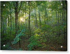 Light Up The Forest Acrylic Print