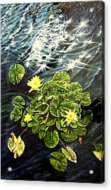 Light Wind And Waterlilies Acrylic Print
