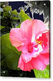 Lighted Flower Acrylic Print by Maureen Kyle