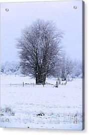 Lightly Falling Snow Acrylic Print by Elizabeth Dow