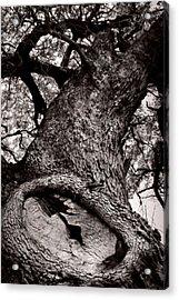Lightning Tree  Acrylic Print by Trish Mistric