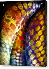 Lightworlds Acrylic Print by Ann Croon