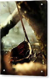 Like A Copper Ladle Scooping Up The Sun Acrylic Print by Rebecca Sherman